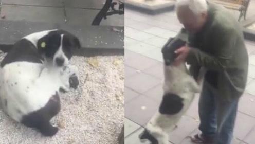 狗狗走失3年后和主人在街头重逢 画面令人感动