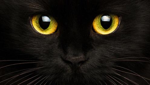 黑猫背后的科学