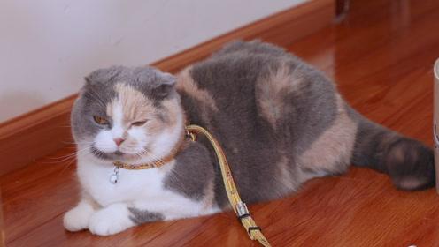为了帮胖猫咪减肥,我也是操碎了心