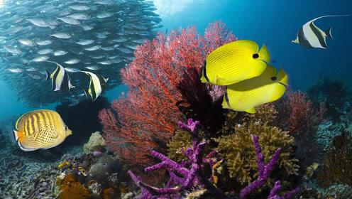 如果把淡水鱼丢进大海,会发生什么?网友:变成咸鱼?