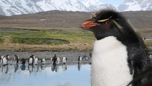 南极旅行:企鹅和它做邻居?海豹是这样繁育后代的!