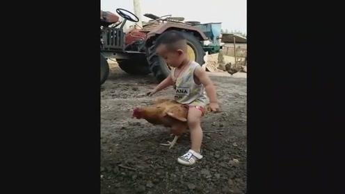 一只老实的母鸡,熊孩子骑在它身上一动不动