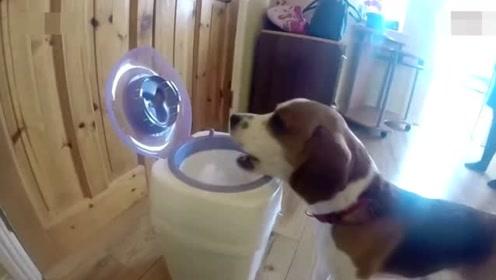 家务小能手!狗子和妈妈超默契配合给小主人换尿布