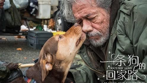 """《一条狗的回家路》曝""""感谢有你""""特辑  感恩人生长路漫漫有你相伴"""