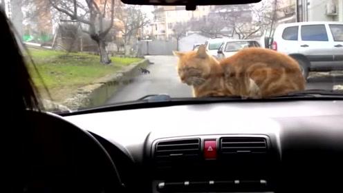 见我要开车出门,家里的猫非要跟着,这位置你可要坐好了啊!