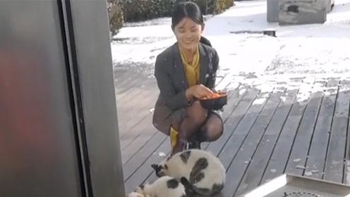 冬天虽冷,但是好心人越来越多,真是一群幸运的小猫咪