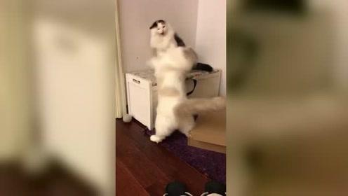 每天家里都要上演动作片,感觉猫生已经达到了巅峰