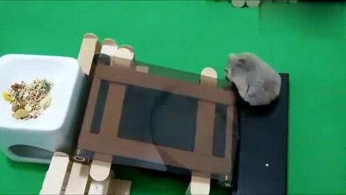 仓鼠跑步机,这只小仓鼠太搞笑,懒惰仓鼠救星有木有