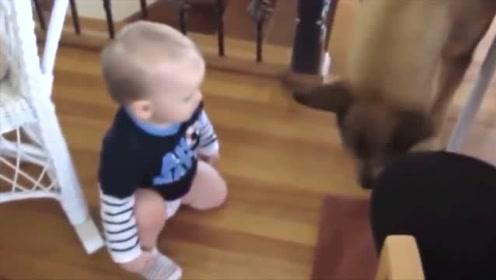 小宝宝在吃饼干,然后狗狗过来一口吃掉,宝宝表情一脸懵,可爱极了