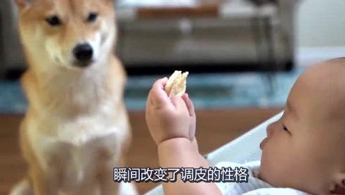 狗狗看到小主人吃饼干,不料小主人将饼干伸到狗狗嘴边,太暖心了