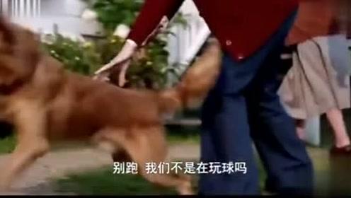 狗狗以为主人和它玩游戏,下一秒狗狗动作反应,好感人
