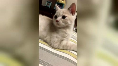 这个小猫咪火了,一脸懵懂的喵星人,太萌了!