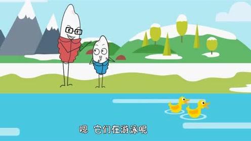 鸭子冬天在水里不怕冷吗?