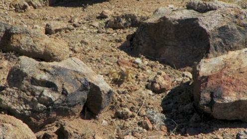 蝎子行走在地上,它的动作十分灵敏,颜色和大地的颜色相近!