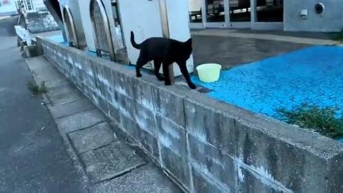 小野猫也都是机灵鬼 知道呆在港口附近总能要到小鱼吃