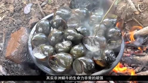 这只3斤重的非洲大蜗牛,跟随货船来到中国,以钢筋混泥土当主食