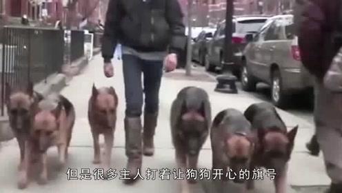 遛狗不栓绳,恶狗冲入人群连伤五人,铲屎官:狗很乖,别伤狗