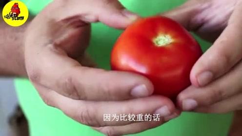 怎样区分激素西红柿?只要掌握这三种方法,轻松筛出激素西红柿