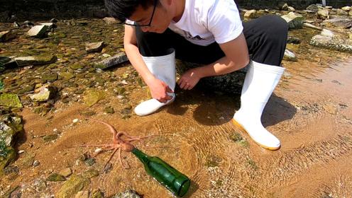 长腿章鱼见洞就钻?小伙用啤酒瓶做了个实验,结果打脸了!