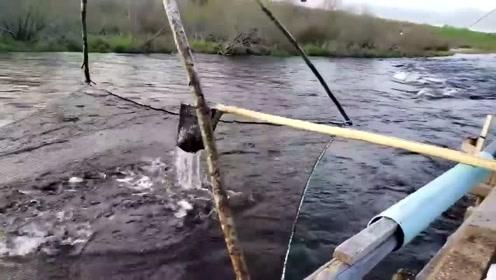 国外的资源真丰富,随便一条河都这么多鱼,国内的恐怕找不到