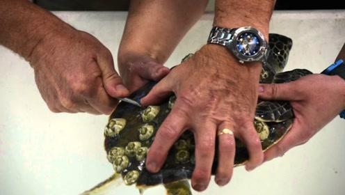 海龟差点被马牙吞噬,好心人伸出援手,镜头记录全过程