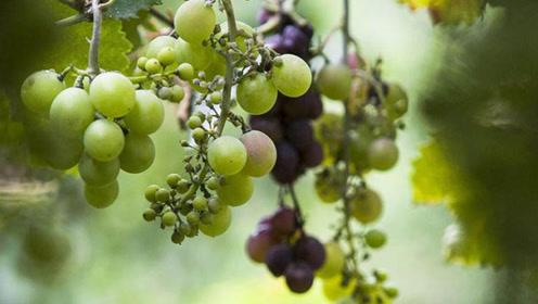 这些常见水果人人爱吃,却也是寄生虫的最爱