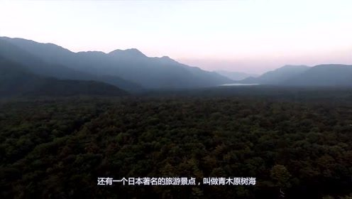 自杀森林,每走1000米就发现一具尸体,你敢去吗?