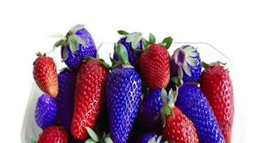 价格很贵的4种蓝色水果,有钱不一定都吃过,你吃过几种?