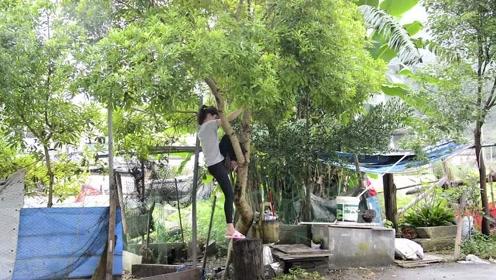 到底是啥?美女冒雨爬树都要去摘,吃后表示:太酸爽了!