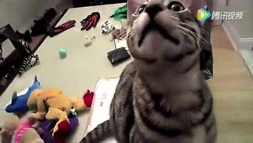 二货主人给猫配音,神同步,笑到肚子疼