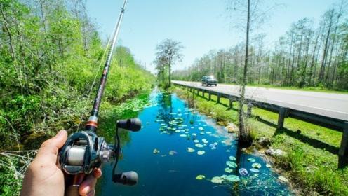 虽然大海鱼多,但是这条小运河里的鱼更是满满的,而且更加方便