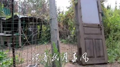 农民歌手张发雷版《滚滚长江东逝水》,丝毫不差大衣哥,好听!