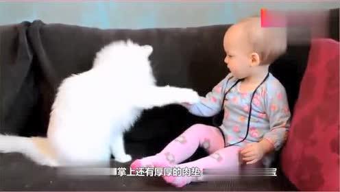 宝宝想摸一下喵星人的脸,接下来猫咪的反应太可爱了