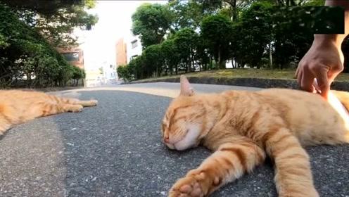 公园里遇到一对橘猫兄弟,颜值高又友好,可以随便摸