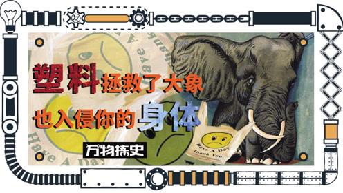 塑料拯救了大象,也入侵你的身体