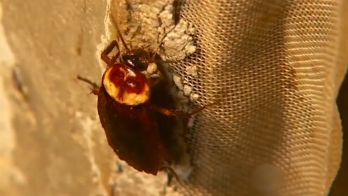 AI系统养蟑螂,一天吃10吨,一年赚10亿,全球最大蟑螂基地