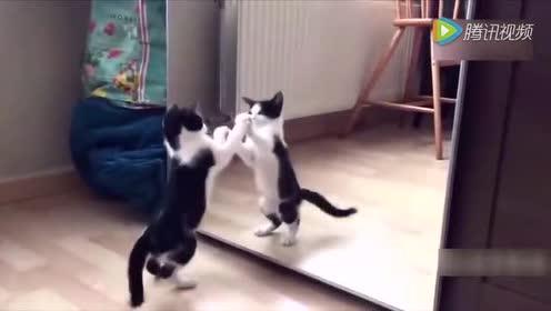 主人买了个猫时钟回家后!家里的猫不淡定了!