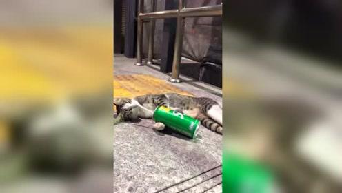 猫咪紧抱雪碧瓶睡着 好安逸哦!