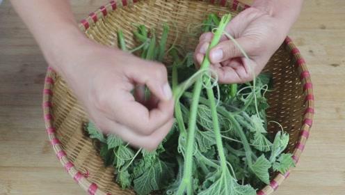 南瓜头健康新吃法,不蒸不凉拌,不加一滴水,一次3斤不够吃!