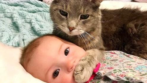宝宝生气不搭理小猫,下一秒小猫的举动,宝妈都憋不住笑了