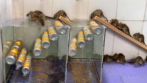 新型的捕鼠器,来多少老鼠都不怕,想逃都逃不掉