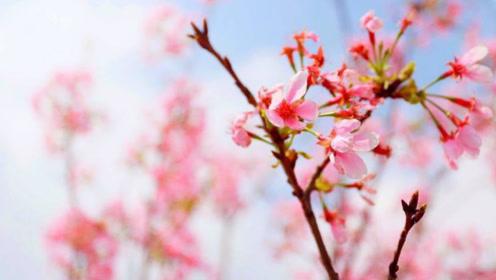 哪些生肖8月桃花运旺,招人喜欢,得人宠爱,到处吃得开!