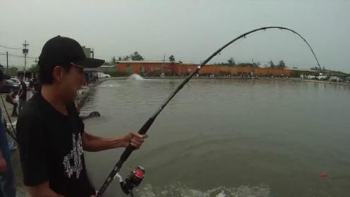 钓到一条几十斤的大鱼,人都快累虚脱了,引来许多钓友围观