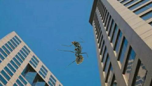 蚂蚁从高空坠落会摔死吗?老外亲自实验,高速摄像机记录全过程