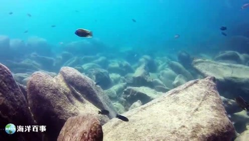 慈鲷鱼原生环境,荒凉之地也能进化出如此多彩的鱼!