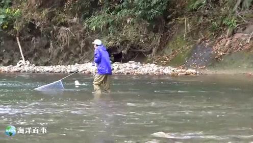 水流下面有大鱼,看准时机撒网!