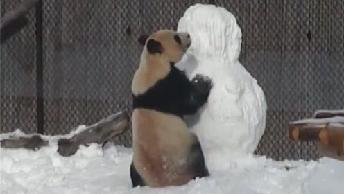 看看熊猫的破坏欲有多强,好好的一个雪人,不拆完不许走