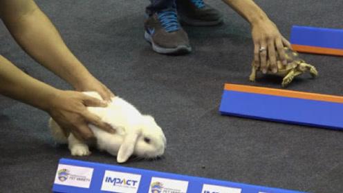 真实版龟兔赛跑,到底花落谁家?网友:原来寓言都是真的!