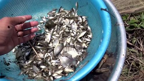 没想到灌溉渠里也有这么多鱼!一网下去,捞上来两三斤!