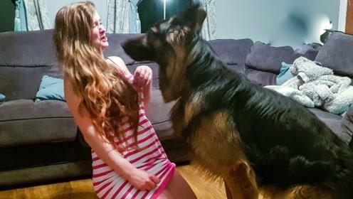 为什么单身女孩喜欢养大狗?真相显而易见,网友:我有大胆想法